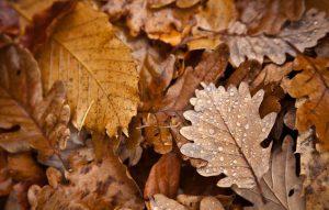 shredded leaves